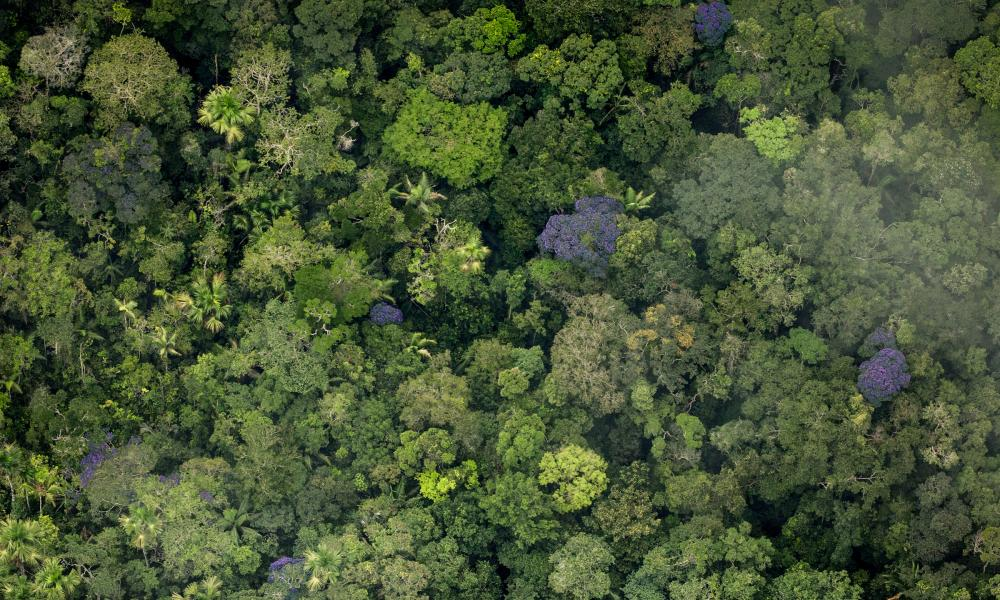Leaked Documents Show Brazilian President Trying To Destroy Amazon Rainforest