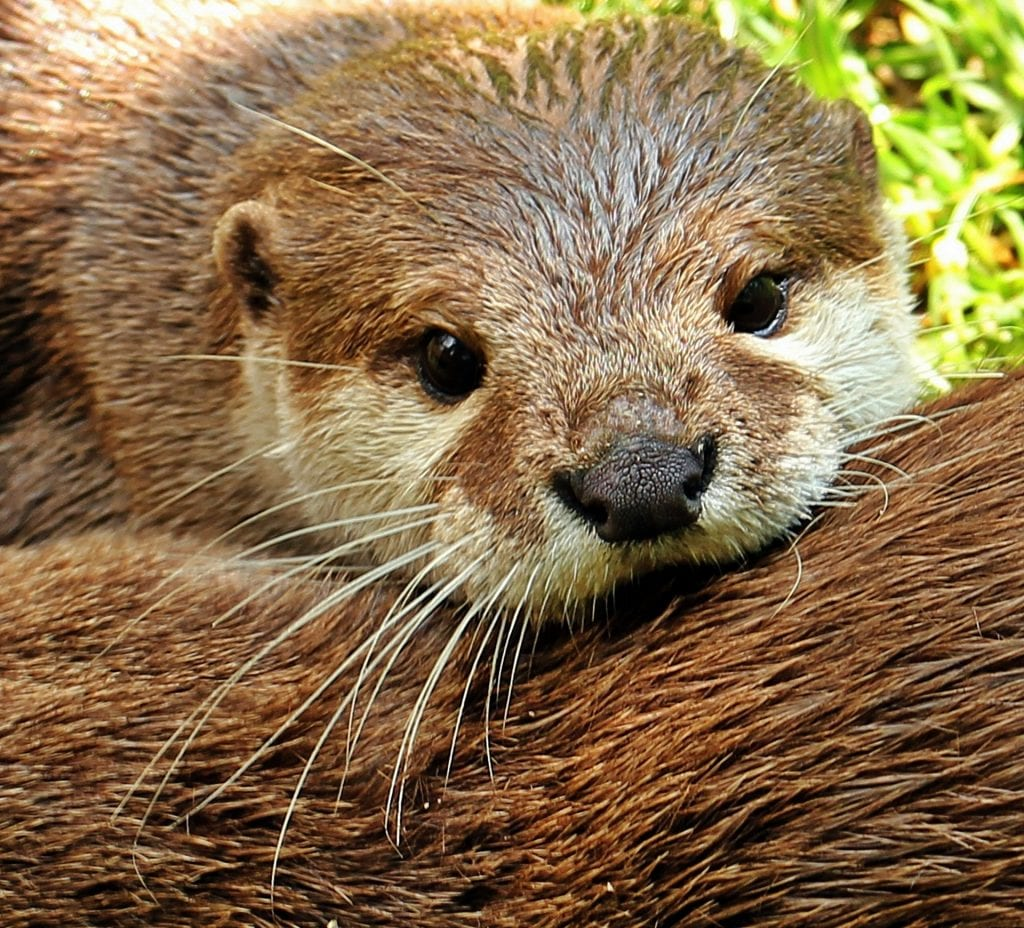 The international trade of endangered otters has been banned after Instagram popularity has been deemed responsible for an increase in poaching.