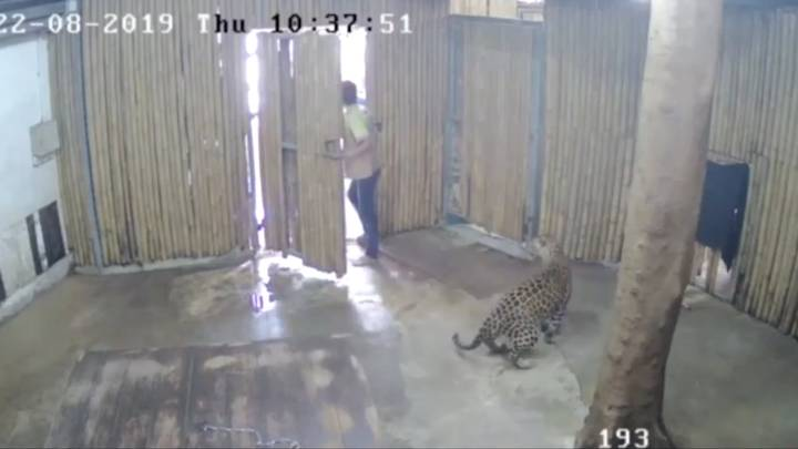 leopard attacks toddler in Koh Samui