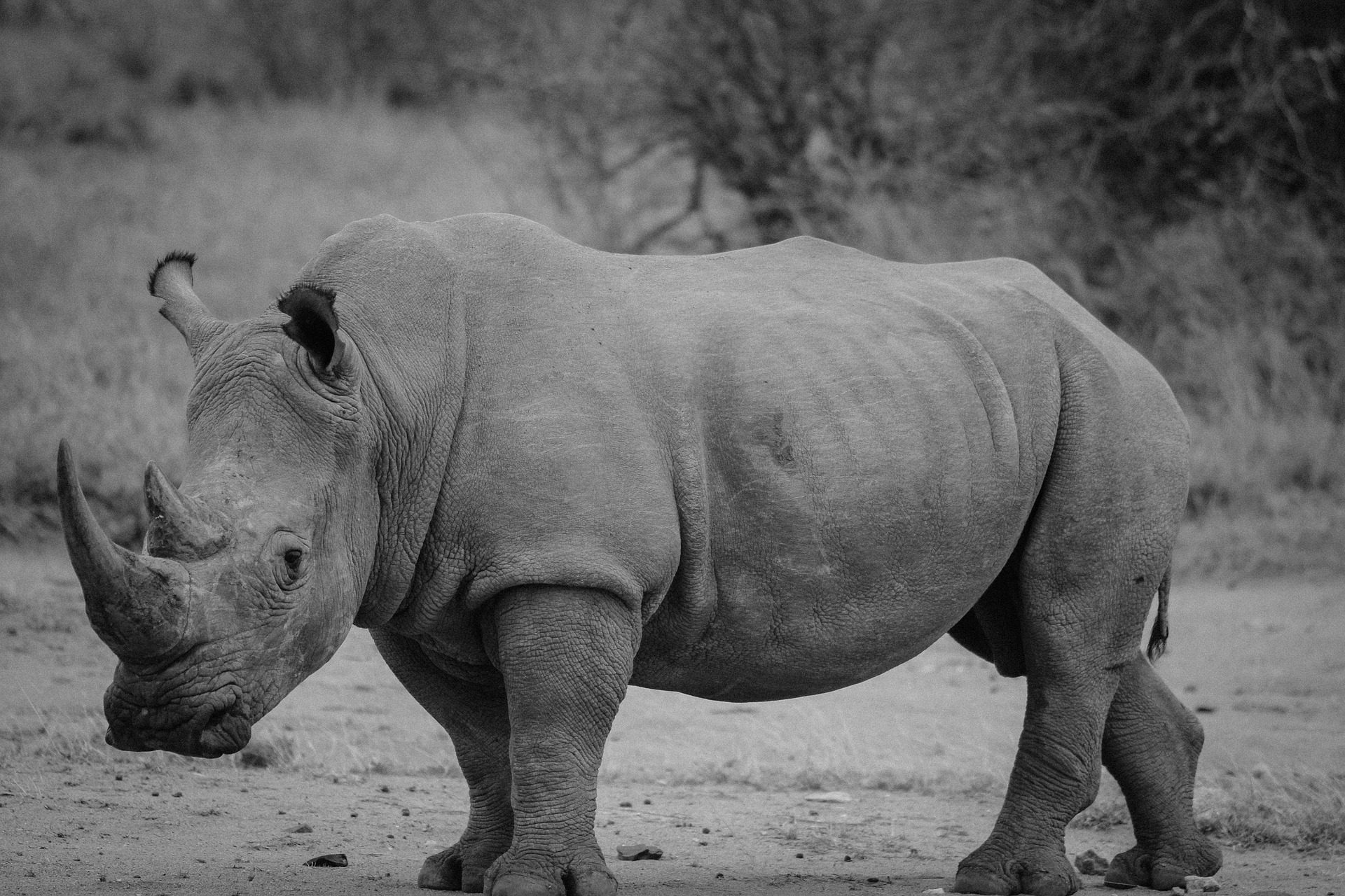 Rhino Poachers Jailed For Kruger National Park Incursions