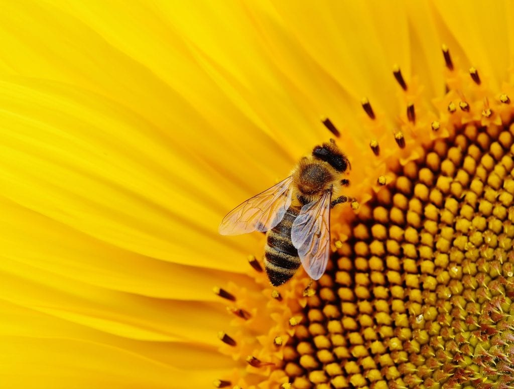 Over Half A Billion Bees Have Died In Brazil In Last Three Months