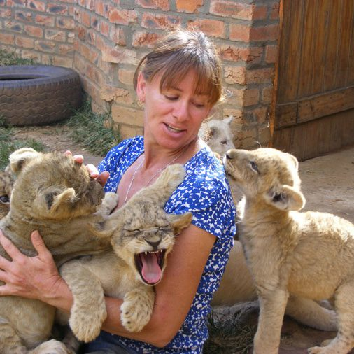 South African Reserve Bans Lion Cub Petting