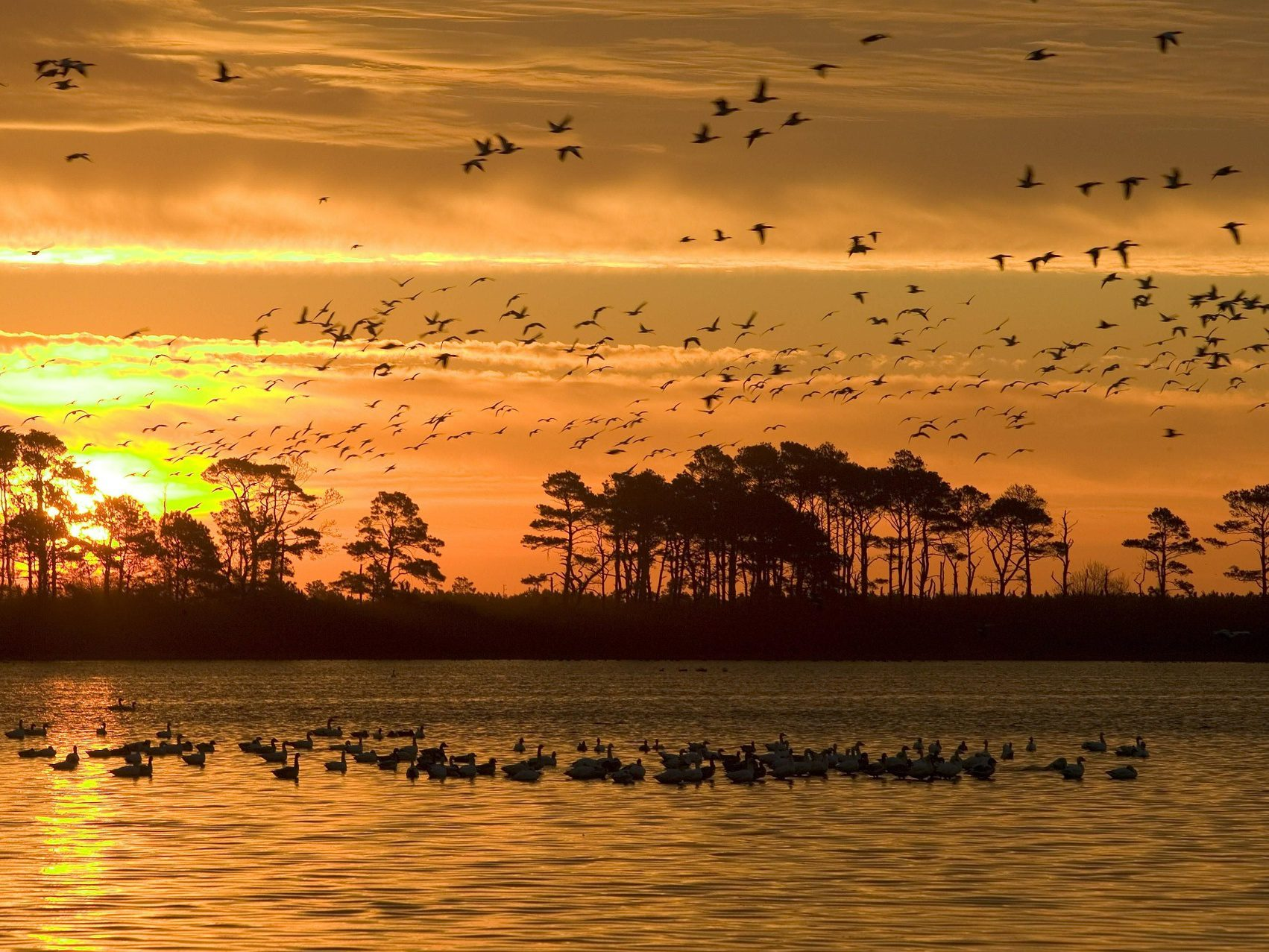 3 Billion Birds Have Vanished From North America In The Last 50 Years