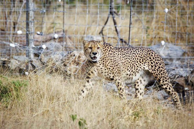 The Importance Of Wildlife Translocation