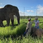 Orphaned Albino Elephant To Rejoin Herd