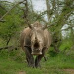 Suspected Rhino Poachers Killed In South African Game Reserve