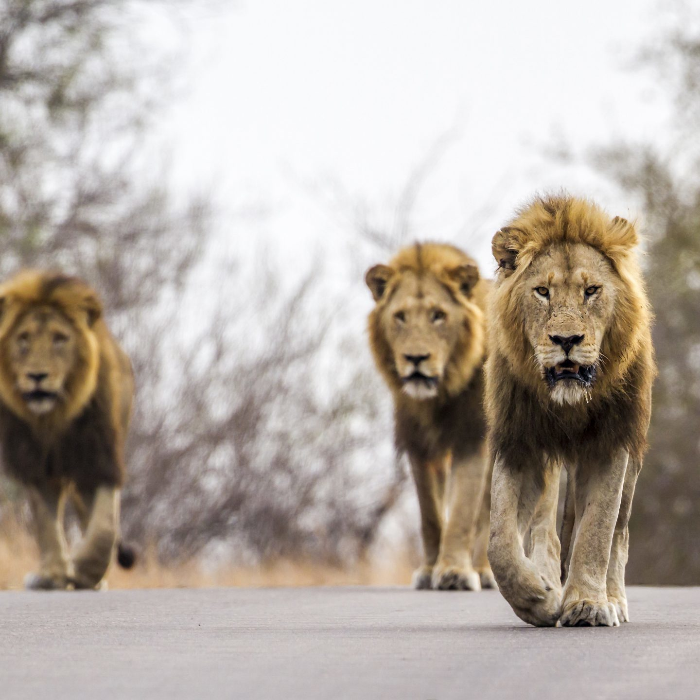 10 animals to look for in kruger national park