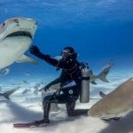 The Sharks Of The Bahamas – Meet The Island' Most Iconic Species