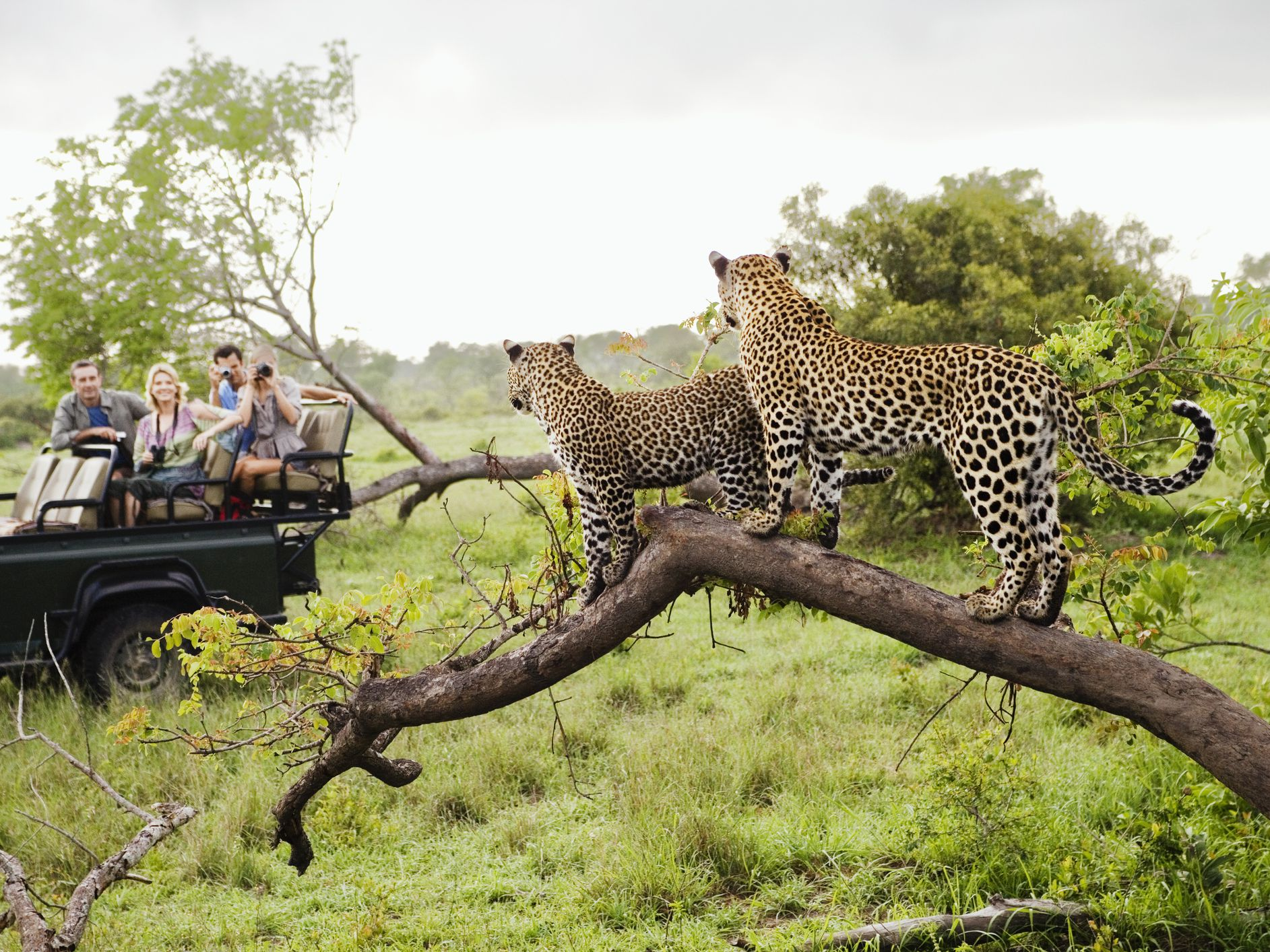 where to stay in kruger national park