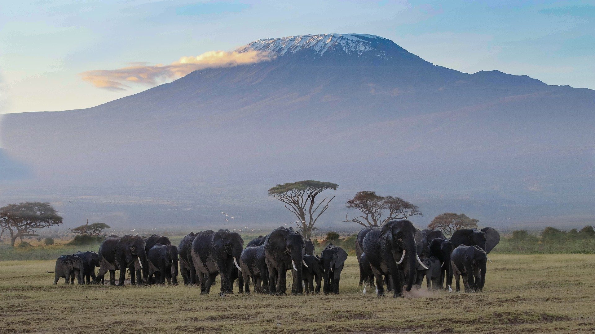 the 10 best national parks in kenya