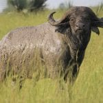 The Big 5 Of Africa – Meet The Continent's Most Iconic Animals