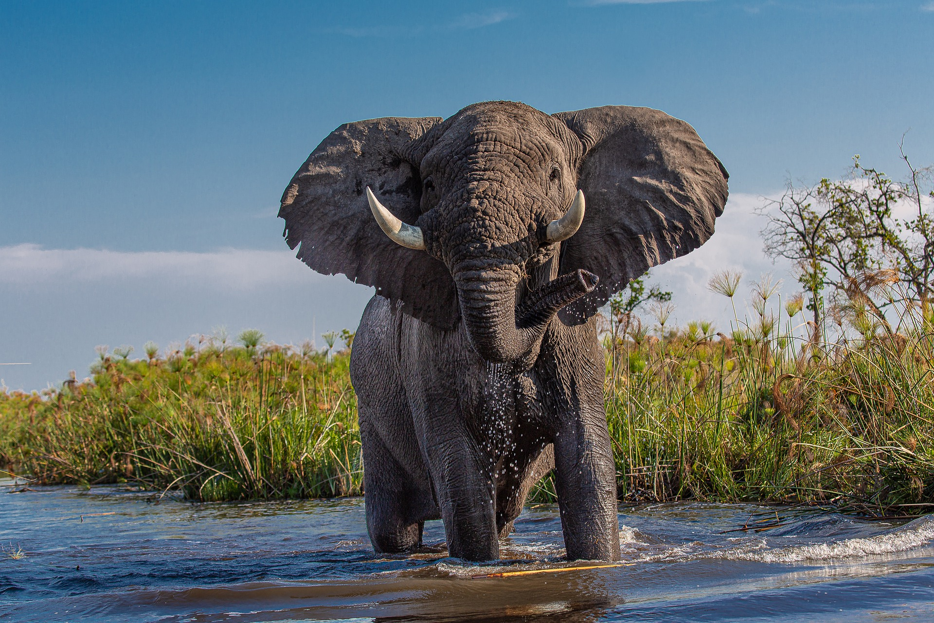 the most dangerous animals in africa