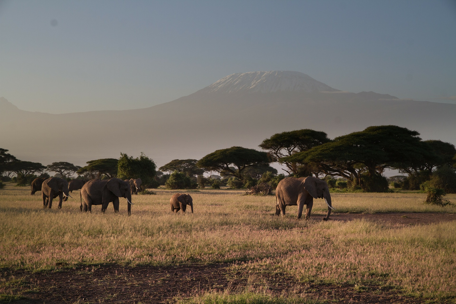 the top 10 national parks in kenya