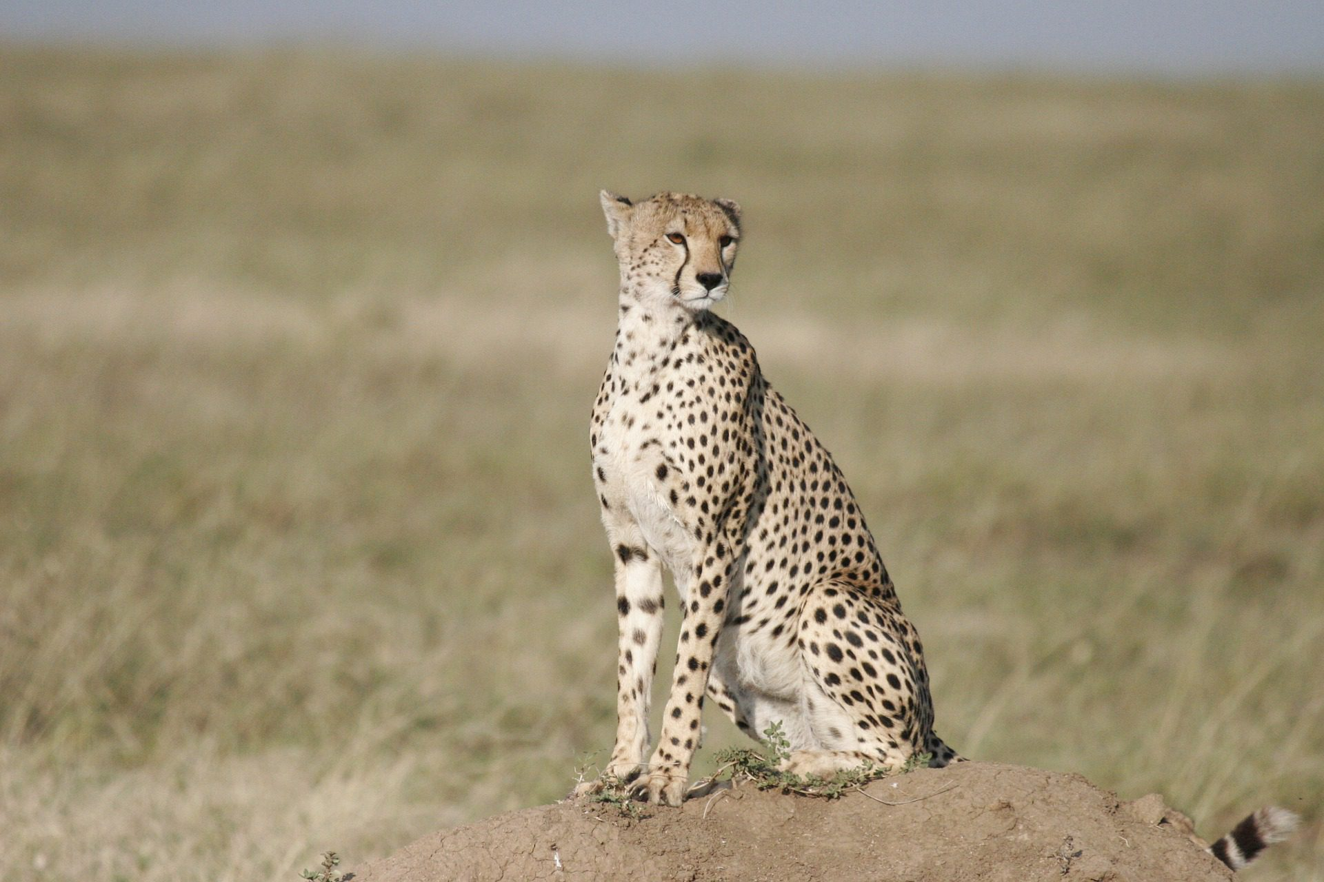 The 10 Cat Species Of Africa