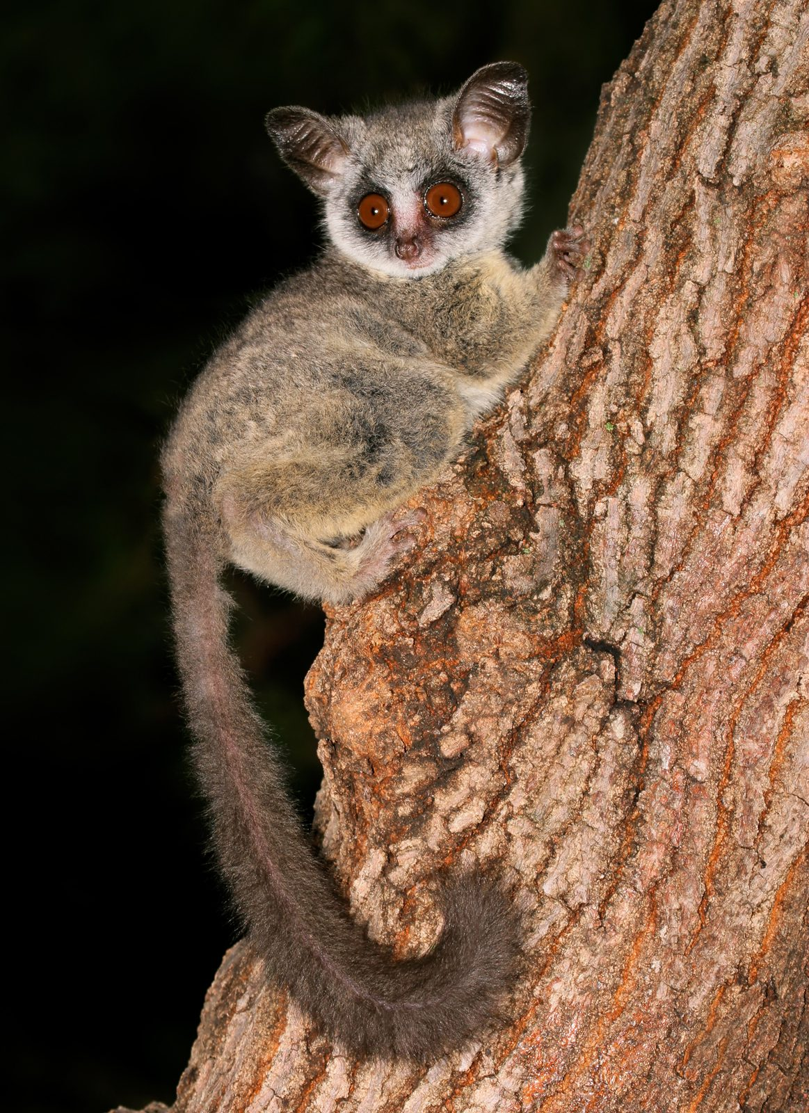 11 Nocturnal Animals To Look Out For On Night Safari In Africa