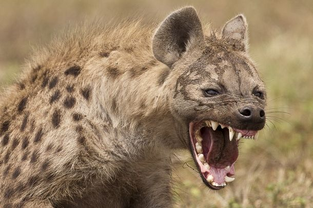 The Ugly Five Animals of Africa