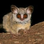 11 Nocturnal Animals To Look Out For On A Night Safari In Africa