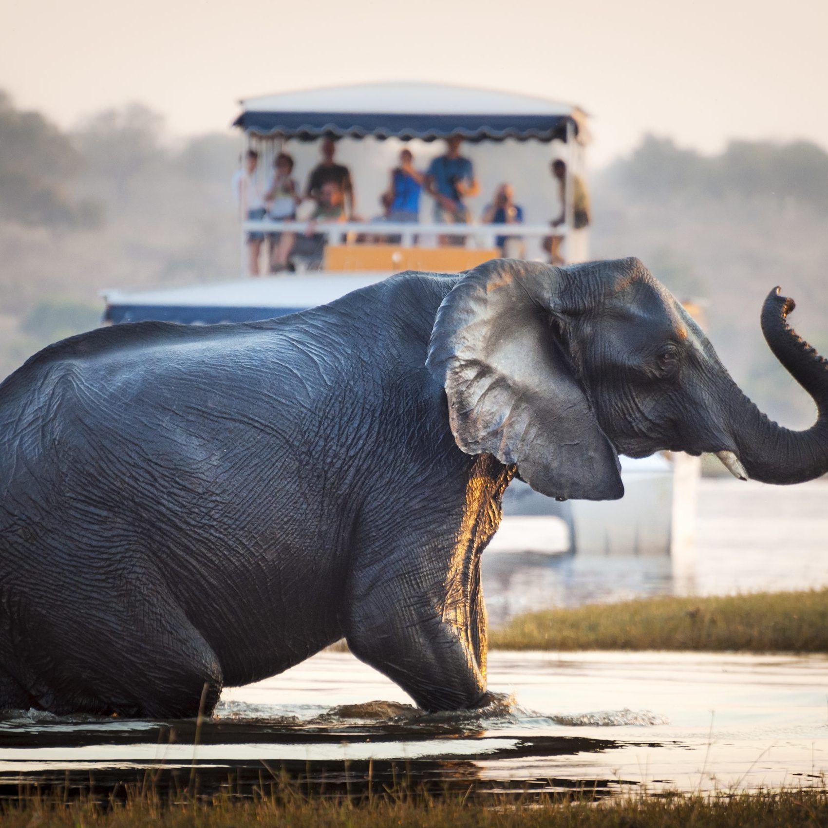 the best places to see elephants in africa