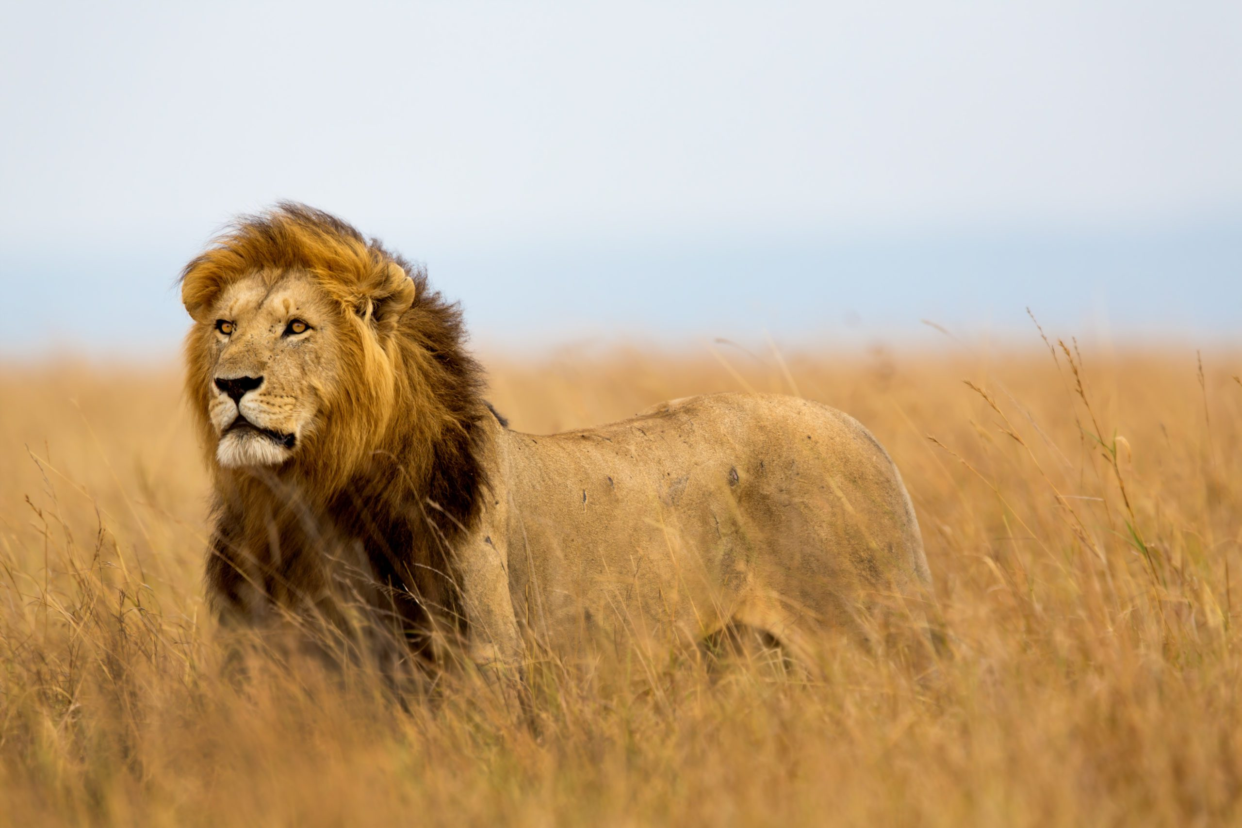 The 6 Best Places To See Lions In Africa