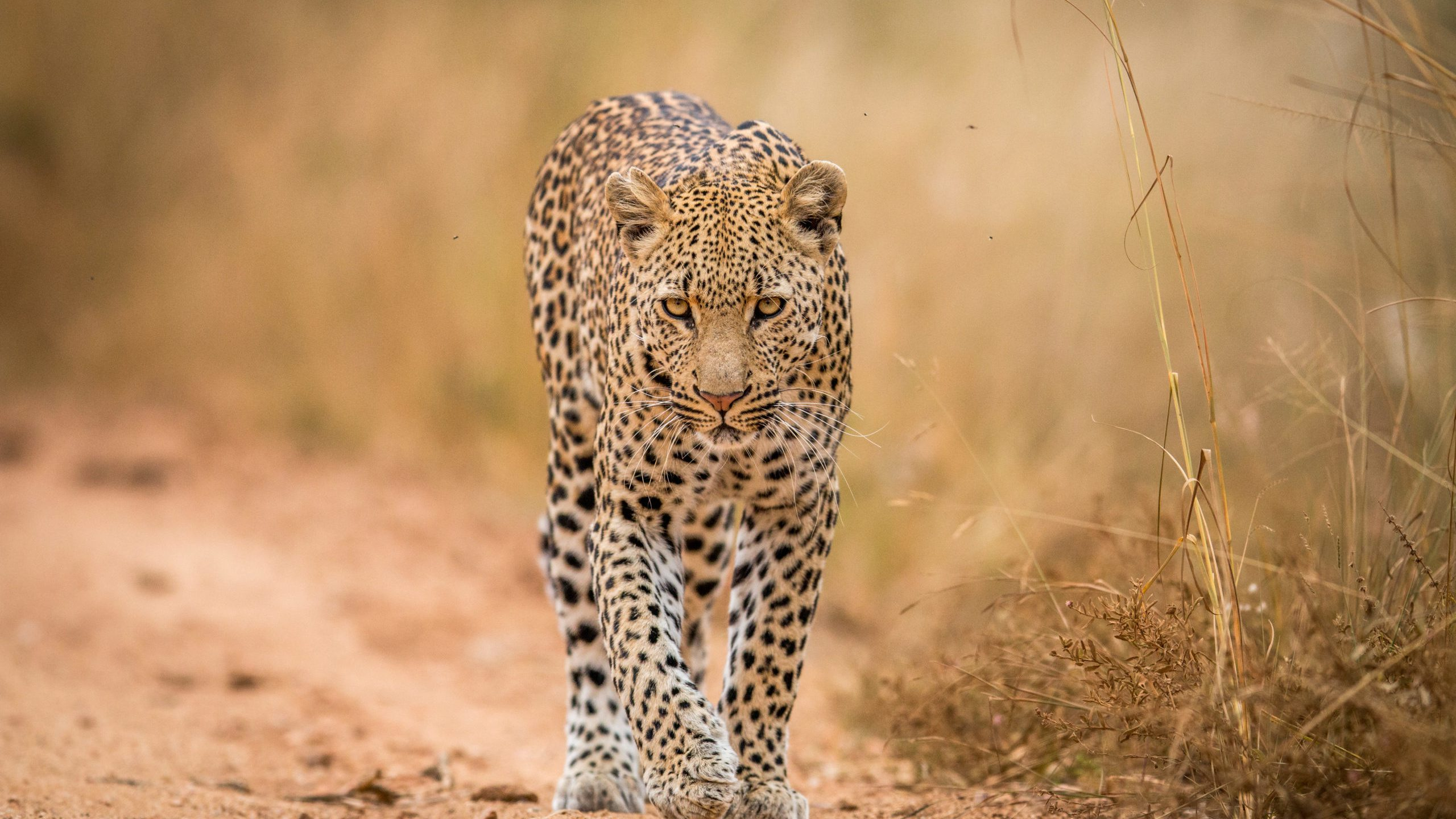 the best places to see leopards in Africa