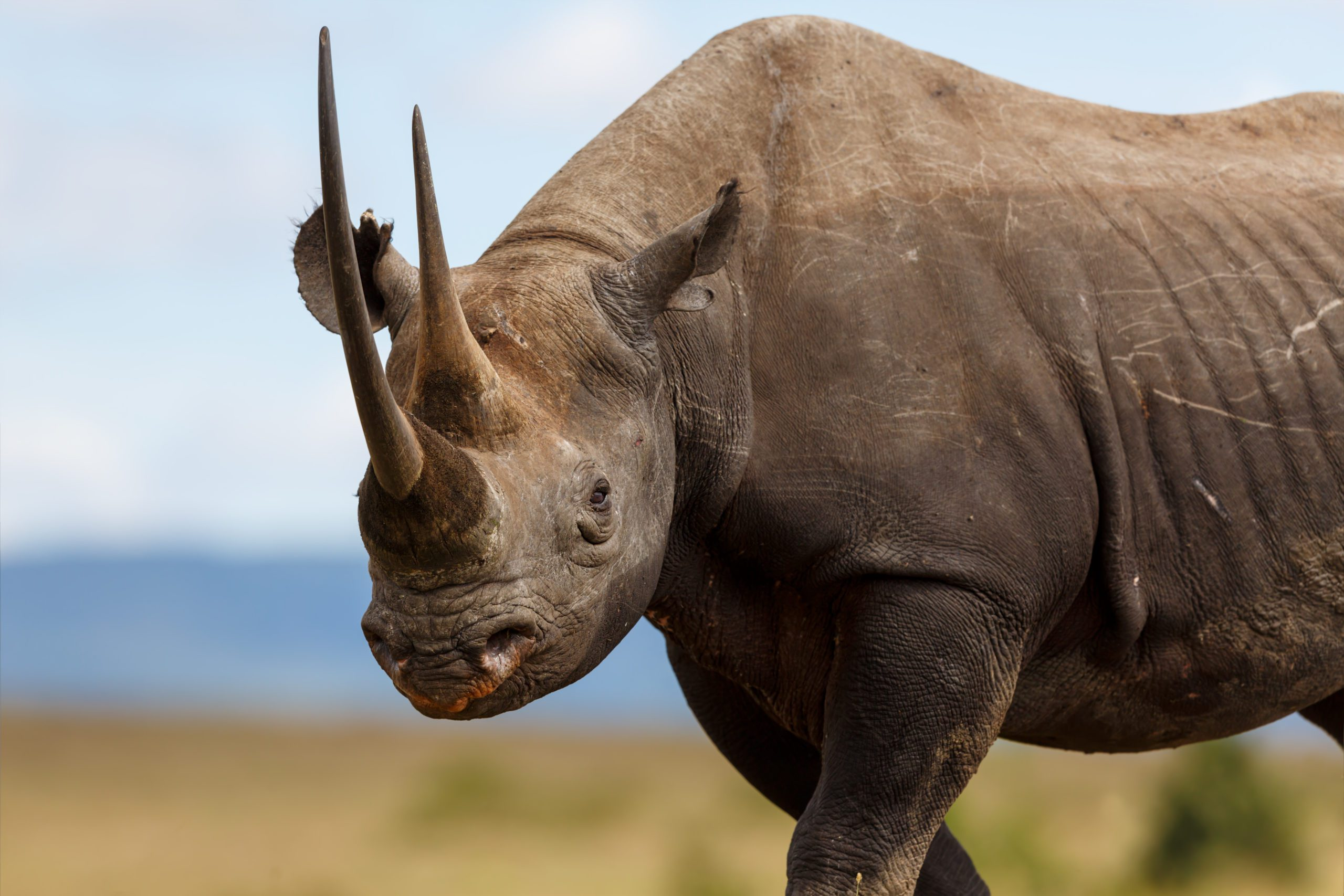 The Most Iconic Animals In Africa and Where To Find Them