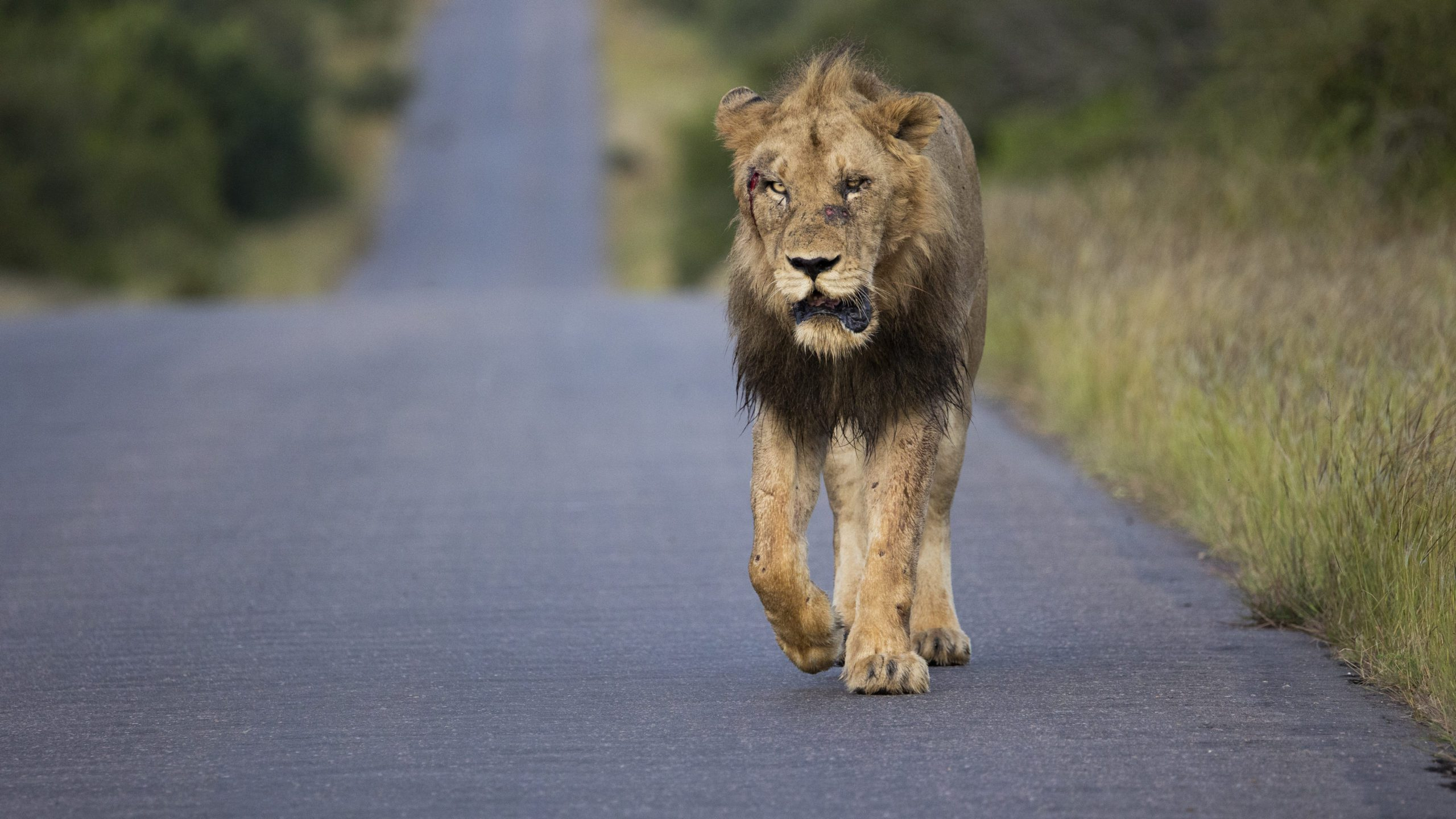 The Best Places To See Lions In Africa